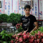 ثبات نسبی قیمت میوههای فصل/ افزایش قیمت گوجه فرنگی